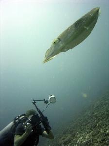 Underwater Photographer at Shark Point