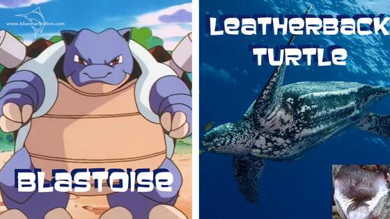 blastoise-leatherback