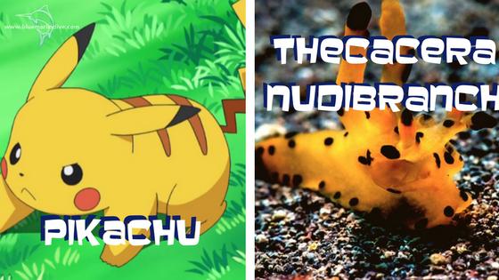 pikachu-theracera
