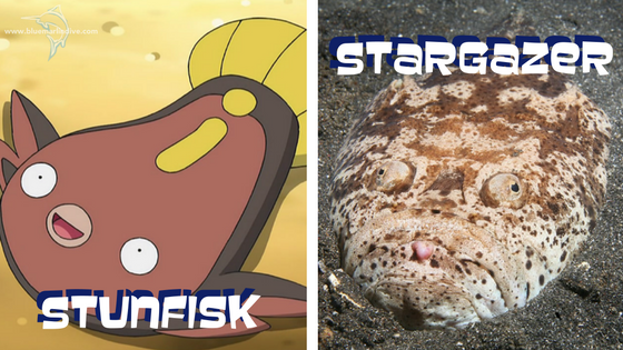 stunfisk-stargazer